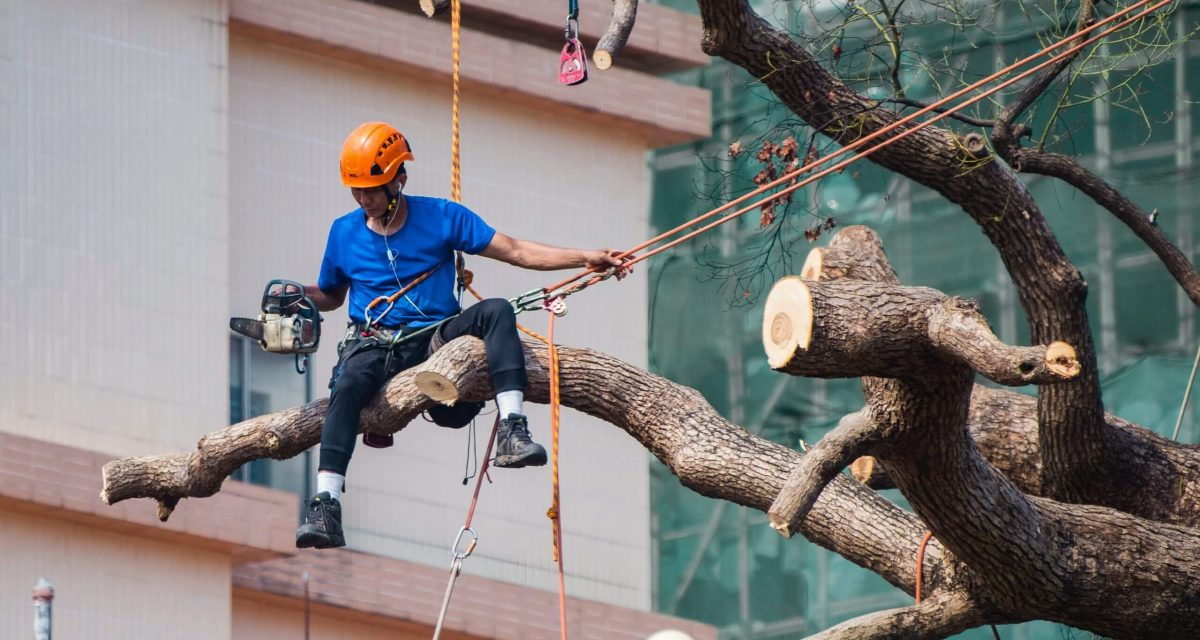 man-in-blue-shirt-siting-on-tree-branch-wearing-safety-2310483-scaled